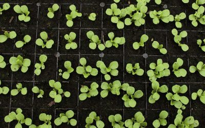 What vegetable seeds to start in February?!