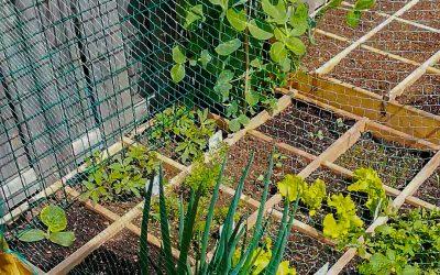 Square foot Gardening Spacing Guide