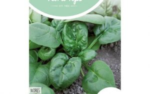 Spinach Nores