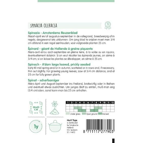 amsterdams reuzenblad spinazie