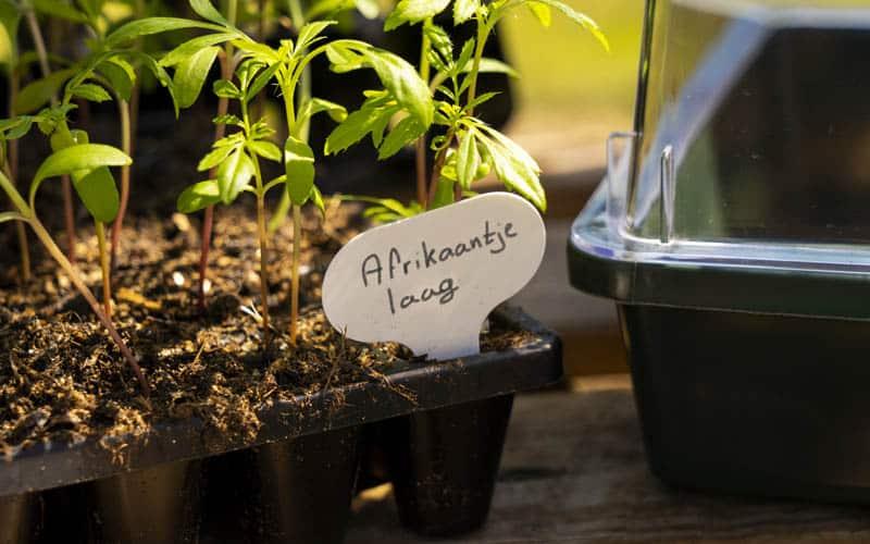 Reusable Plant Label