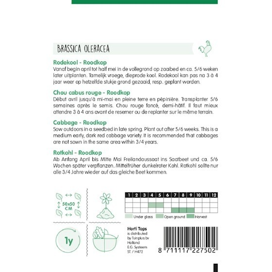 cabbage roodkop growing instructions