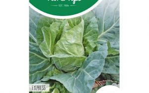 white pointed cabbage express
