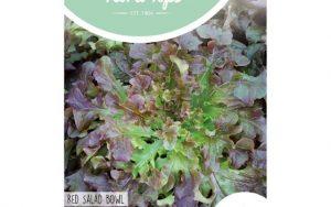 HT red oak leaf salad bowl