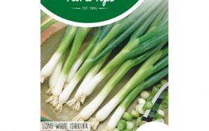 HT spring onion long white ishikura