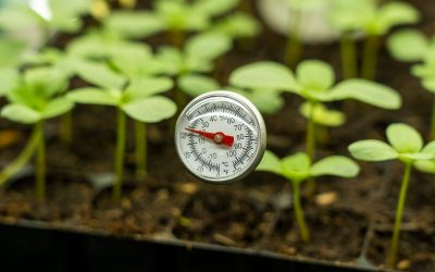 When To Use A Heatmat For Germination Of Plants