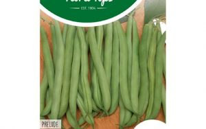 bush beans prelude